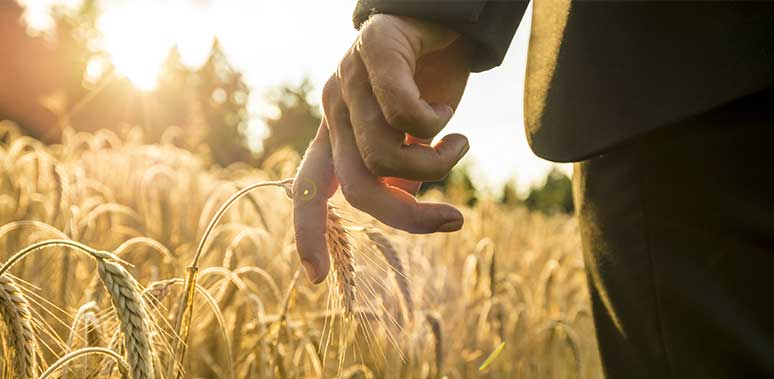Man In Suit's Hand in Wheat Field Feature