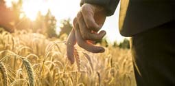 Man In Suit's Hand in Wheat Field Thumbnail