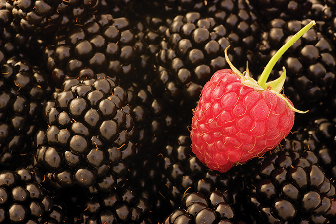 Blackberries and Raspberry Feature
